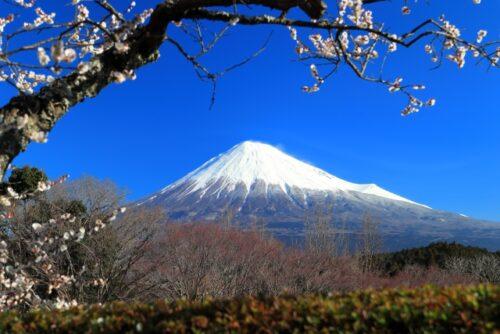 富士市の岩本山公園