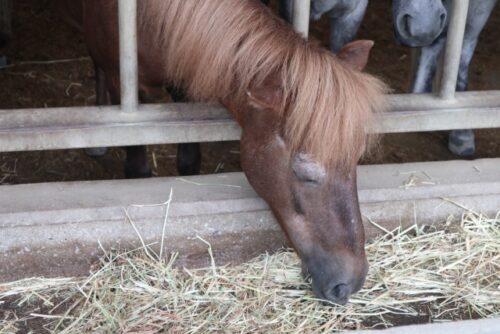 今治市の野間馬ハイランド